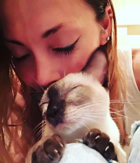 """""""Nuestro último gatito de adopción, Vivi-chan, en mi regazo 😴 Hoy hemos trabajado bien otra vez ❣❣❣ Es la segunda gata de mi hijo Simba. Siempre la llamo bebé 🙀 🐣🐣🐣🐣"""""""