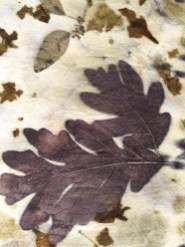 oak leaf prints