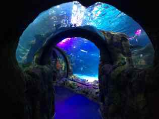Sea Life Michigan Aquarium - Walkthrough Tunnel
