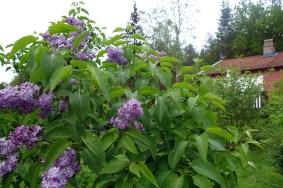 blommor 016