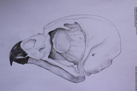 Owl skull - pencils