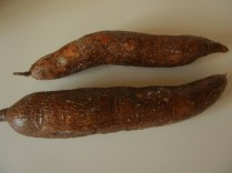 Yucca Root (Cassava)