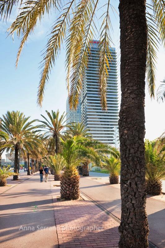 Port Olimpic - Barcelona - Catalonia - Spain - Mediterranean