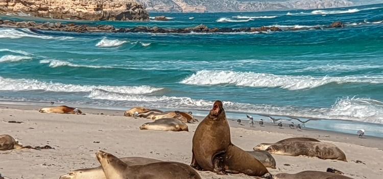 2 Day Kangaroo Island tours