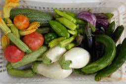 Vegetables all organically grown at Stavrianna