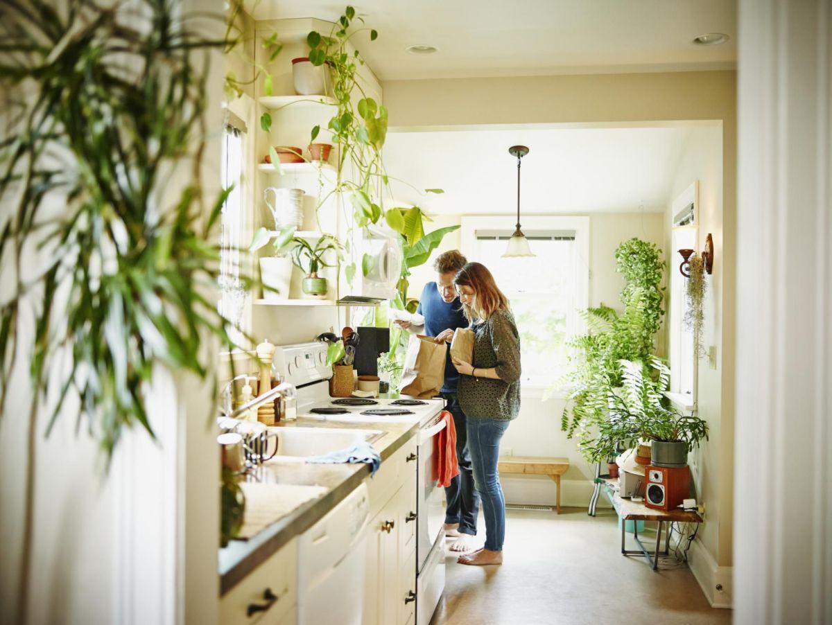 Så odlar du frisk luft hemma. NASAs guide till luftrening med växter.