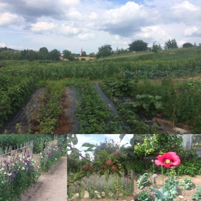 Mandelmanns trädgårdar, som Toscana i Sverige.