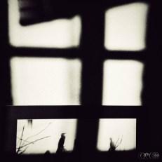 CIRCE The Black Cut 2015 @ aeaea space [port b] Birds Photo by Dimosthenis Maragos | image taken by Tilemachos Kouklakis©