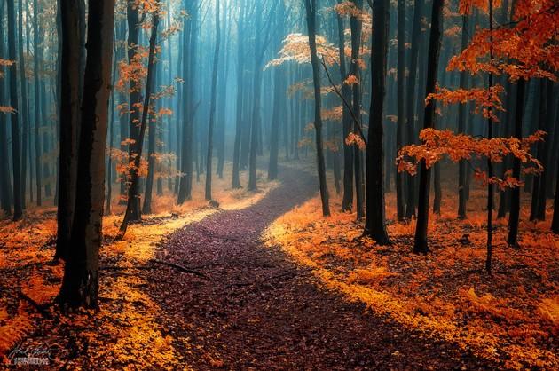autunno-foto-630x418