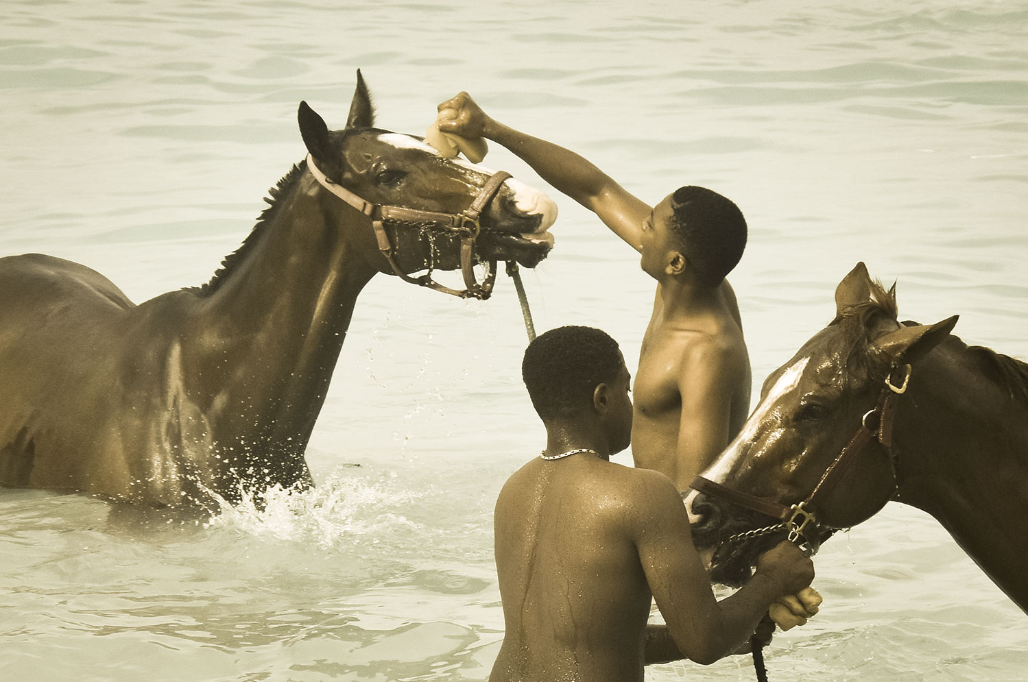Of Men and Horses and the Morning: The Swimming Horses of Barbados