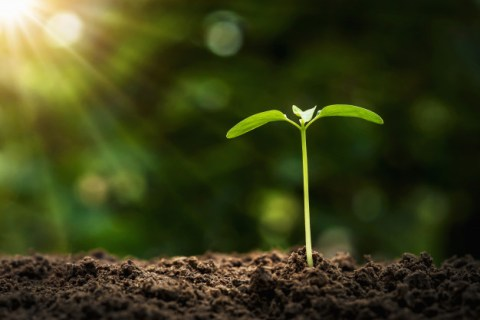 agriculture-planting-concept-young-tree-growing-soil-with-morning-light_34152-1858
