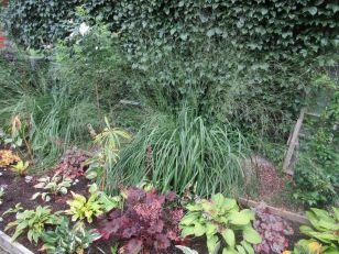 Kanotrabattens moliniagräs är nu fint