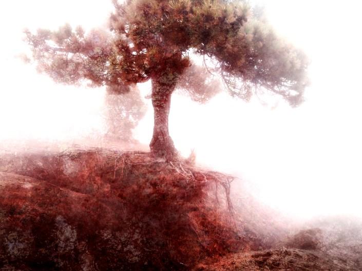 Le Sang de la Terre