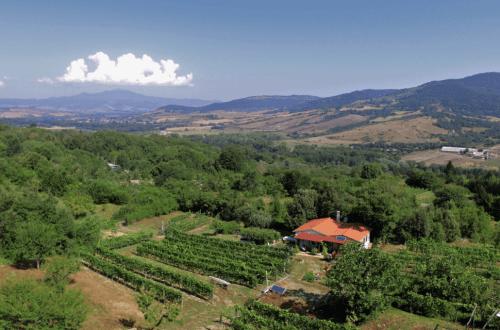 vingård-italia-anne fredrikstad