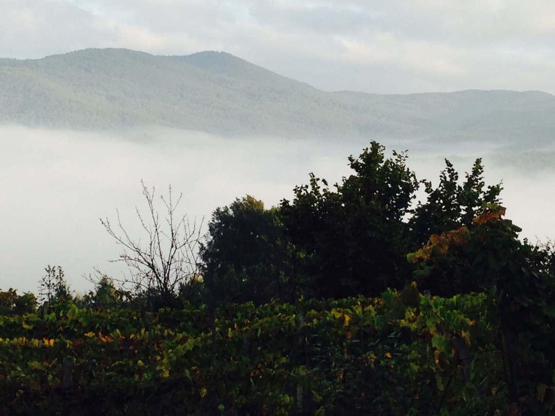 vinhøst-morgendis-vingård