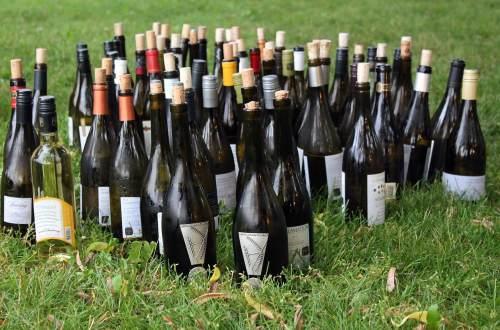 Nye viner på polet. Foto: Pixabay