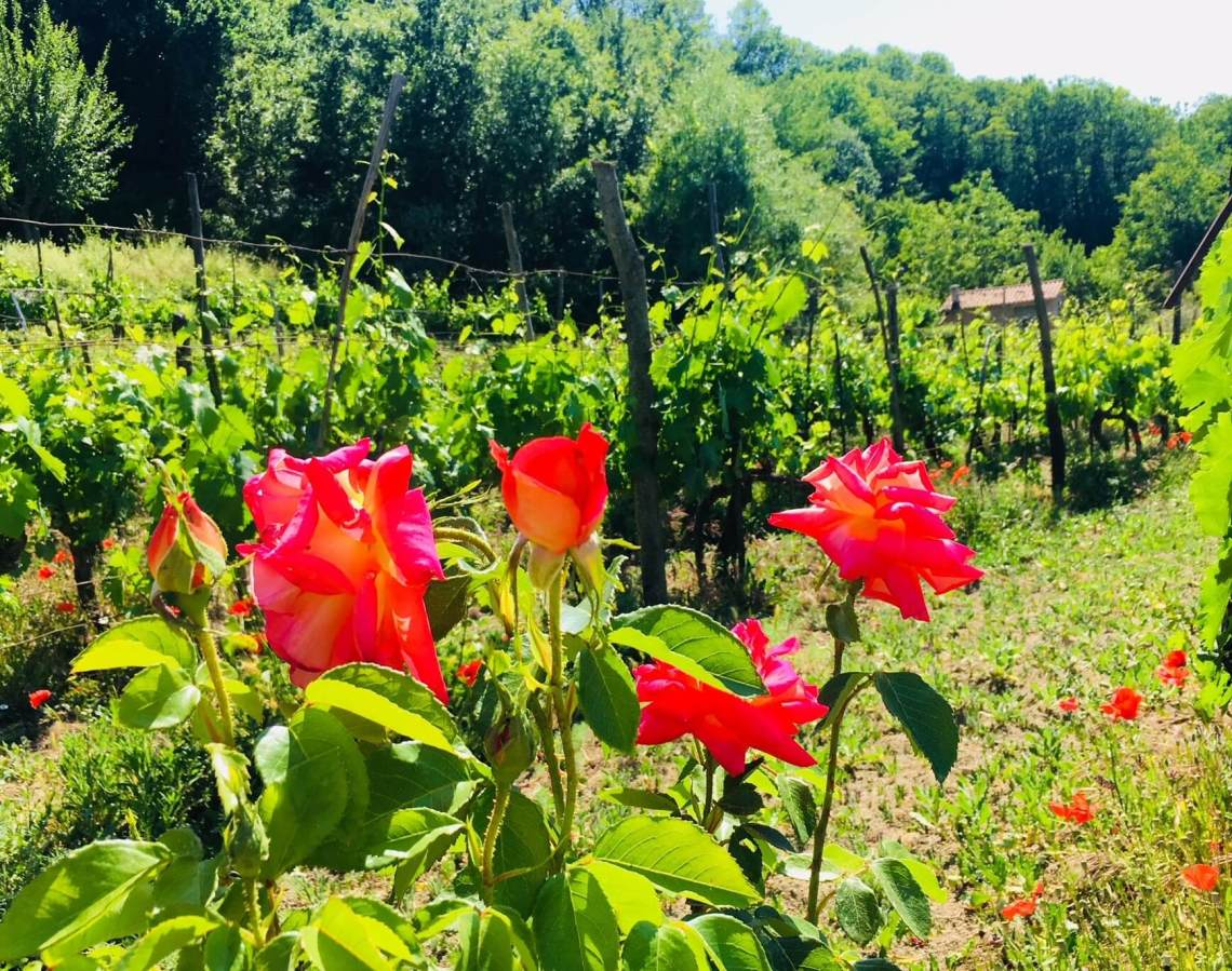 Hvitt, rosa og musserende. Det er hovedfargene i de vårlige viner som nå lanseres i mai-slippet på Vinmonopolet. Nord-Italia er godt representert. Legg også merke til at England er på menyen. Miljøvennlige emballasje/flasker og økologiske viner er også i Vinmonopolets satsing.