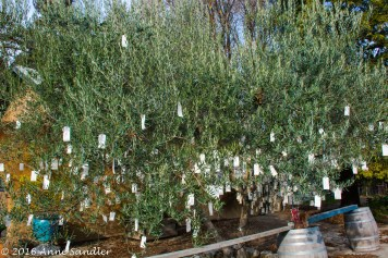 The treasure of this town is this message tree. It's full of wishes from residents and visitors.