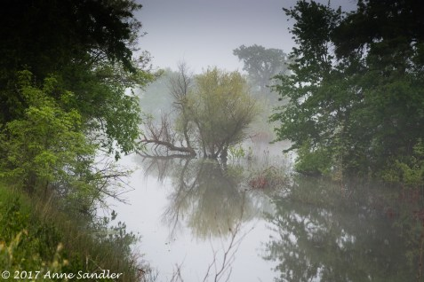 A scene of fog and reflection.