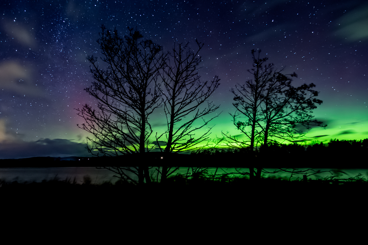 Northern Lights through the trees at Balgavies Loch, Angus