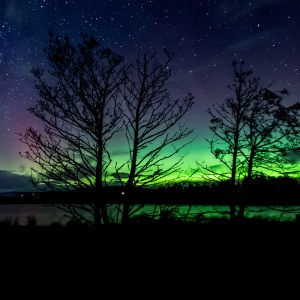 Northern Lights through the trees at Balgavies Loch