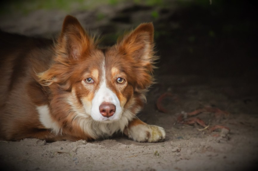 Photo of a dog taken by a client of Anne Johnston
