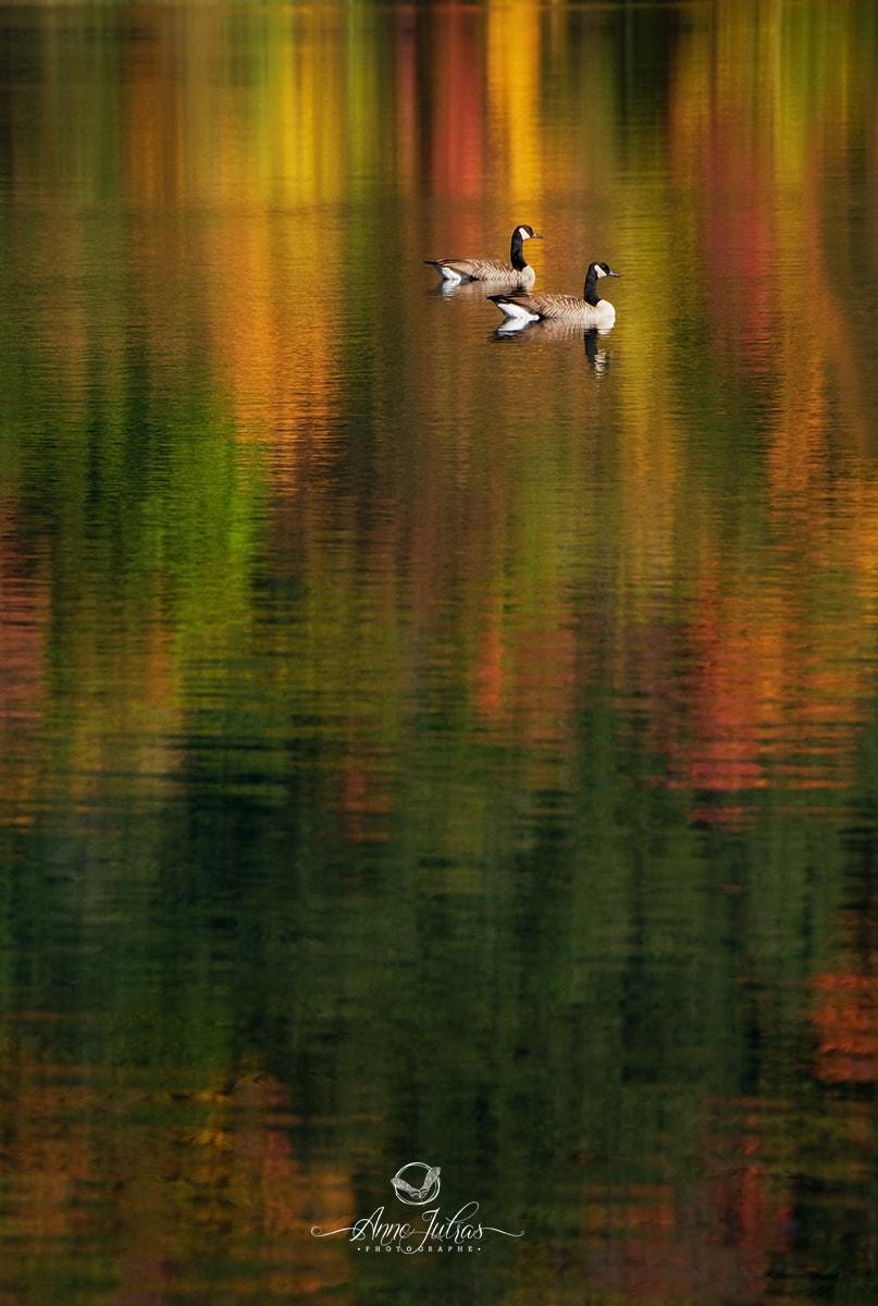 Reflet - Belles photos d'automne