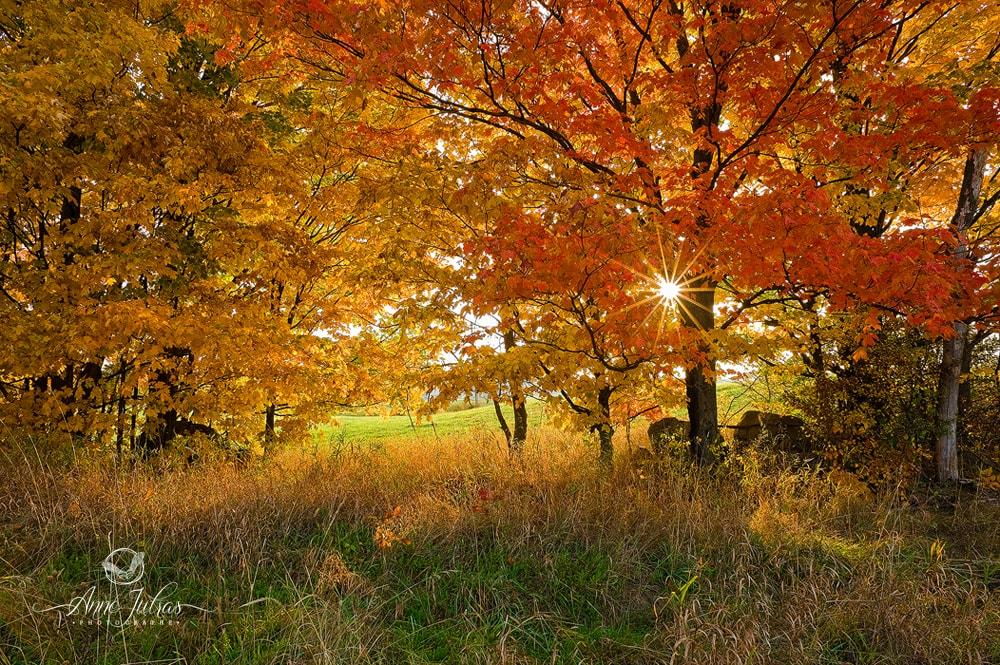 Effet étoilé - Belles photos d'automne