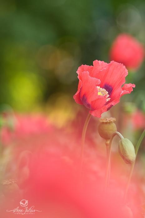 Photos de fleurs - photographier au travers