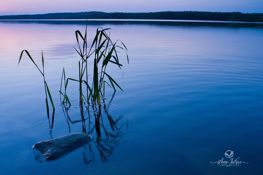 heure bleue - photo nature