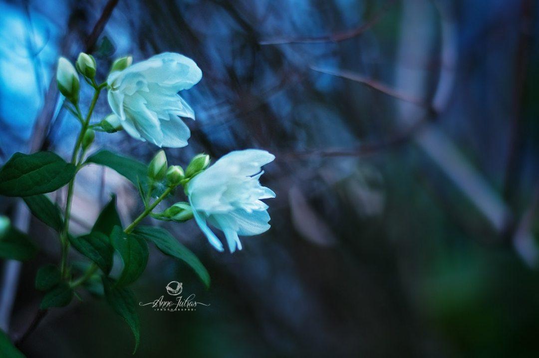 heure bleue - photo macro