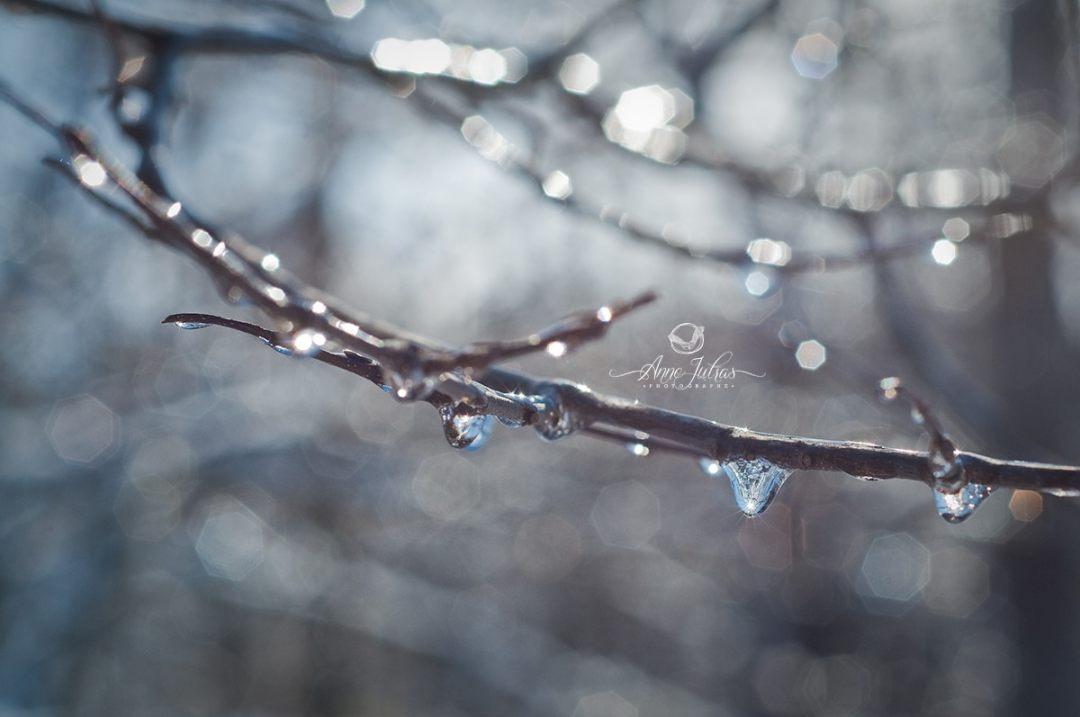 Mon approche photographique : relier le cœur à la vision | photo macro