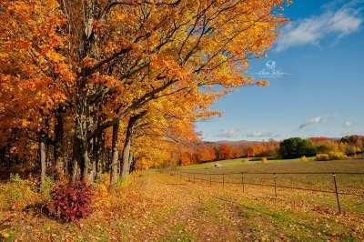 Couleur d'automne - Cowansville, Québec, Canada