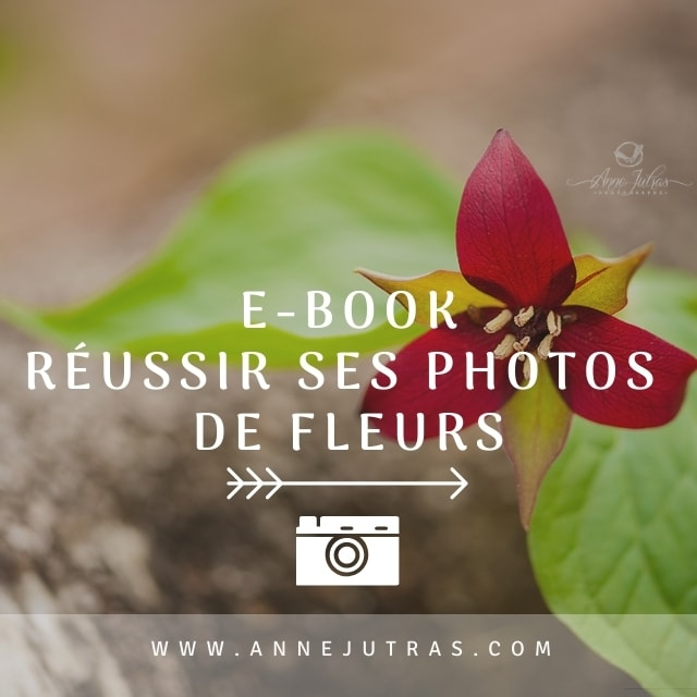 e-Book, livre virtuel, Réussir ses Photos de Fleurs