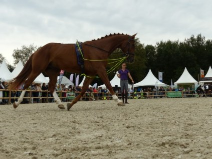 Horse Event - Longeer Clinic