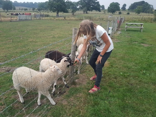 Liv is een schapenfluitsteraar