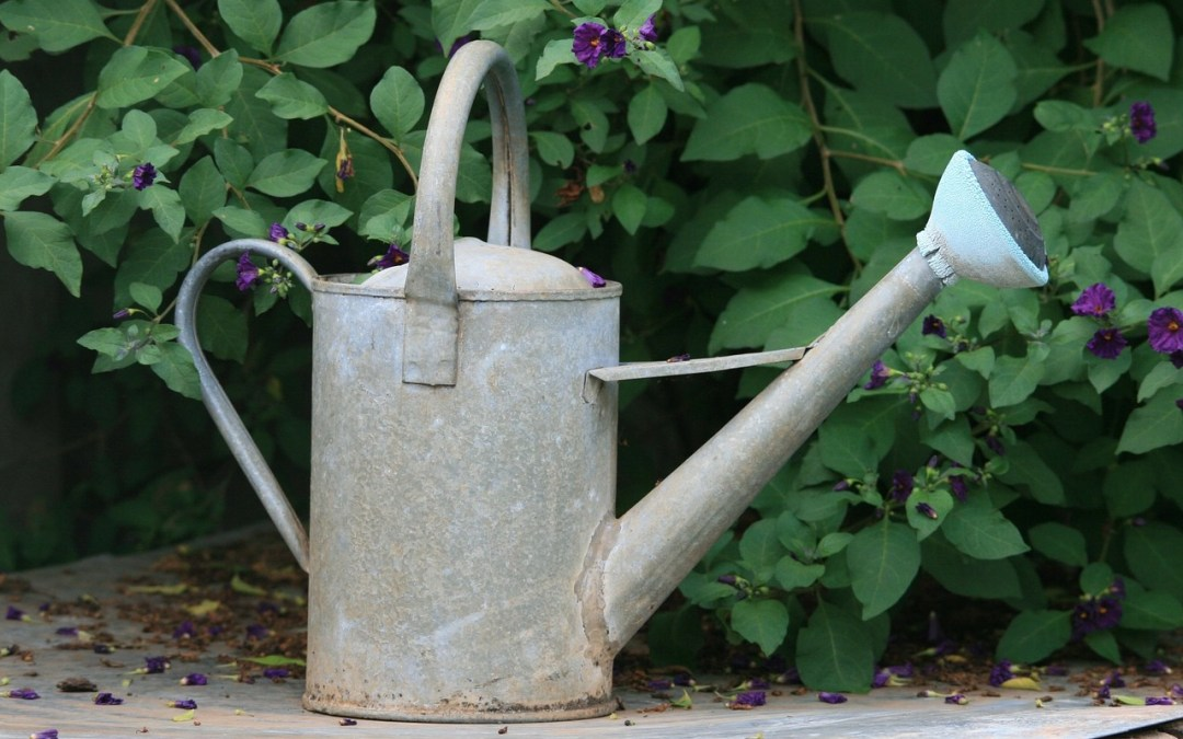 Chores and Watering Can
