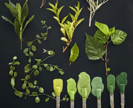 The Amazing Qualities of Green and How to use it in your Home