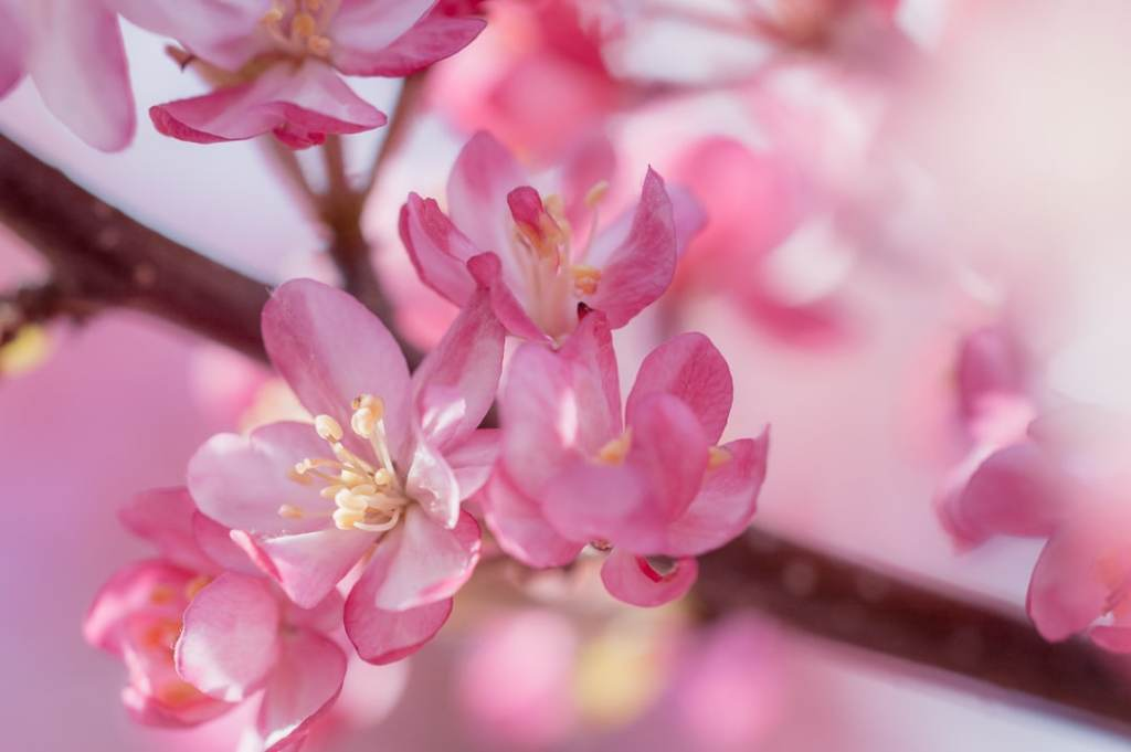 Check out sights in your neighborhood this spring like this beautiful crabapple tree.