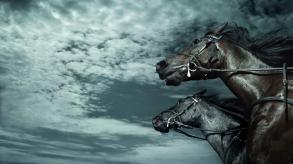 dark-horses