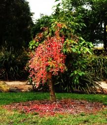 jan-1-kerbside-tree