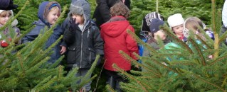 looking for the Christmas tree fairy