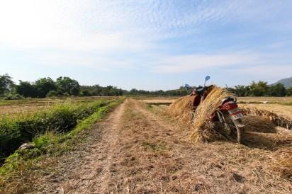 農道での一コマ。オートバイにもたれ掛かるわらの雰囲気が気に入って撮影。