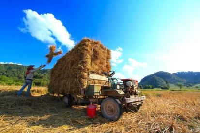 チェンコーン付近にて。オリジナルの農作業車が愛嬌があって眺めているだけで楽しい。