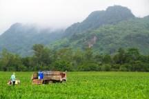 まだ霧が残っている早朝、農作業が始まる。寒いので長袖が必要だ。