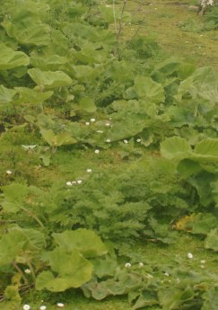 photo describing Irish Green