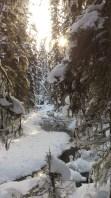 Along Fox Creek