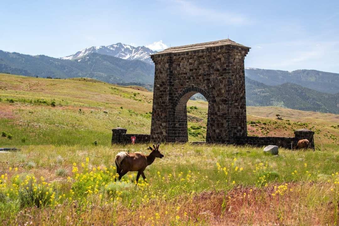 Annie Explore - Yellowstone