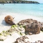 Curaçao et ses plages idylliques!