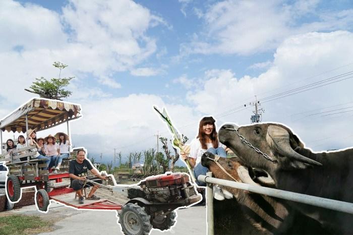[宜蘭壯圍 牛頭司 – 耕牛小學堂] 搭牛車 牽牛犁田趣 用五感體驗農事  感受人與牛最緊密的情感